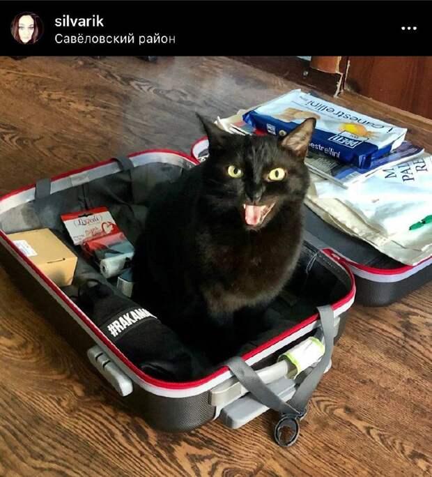Фото дня: чемоданный кот из Савеловского