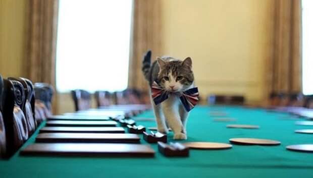 Влияние кота Ларри на британскую политику – нешуточные доказательства британия, кот ларри, политика