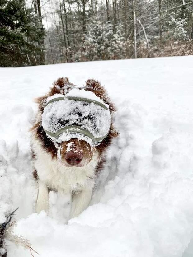 Увидев очки в руках хозяйки, собака сияет от счастья. И у нее есть причина!