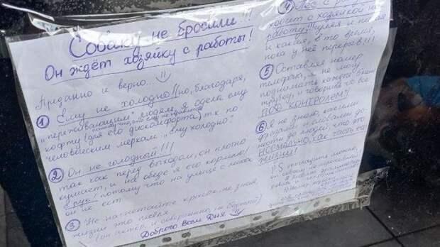 Русский Хатико: трогательная история про хаски в синем свитере из Калининграда