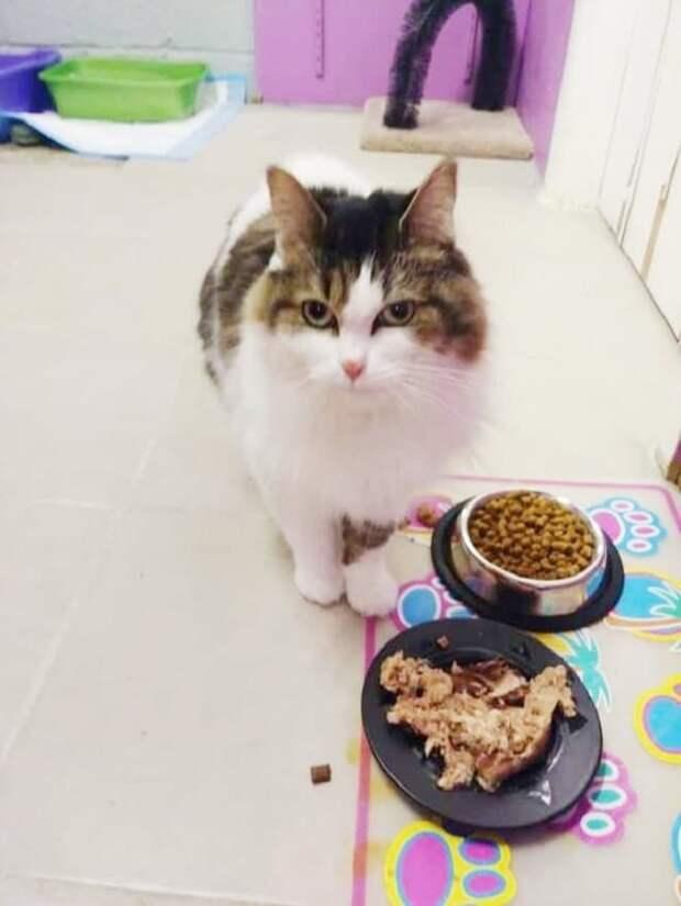 После гибели хозяйки кошечка отказывалась есть и очень грустила…