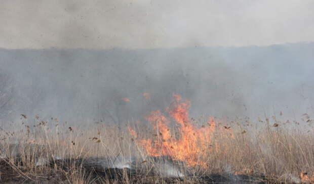 Под Домбаровкой по вине тракториста сгорело 3 гектара сухой травы