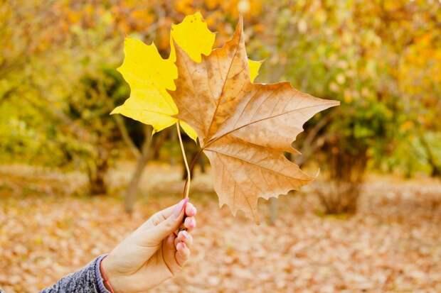 Потепление начнется в Удмуртии в последний день сентября