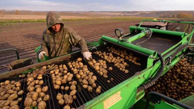 Борщевой добор: Минпромторг попросил регионы увеличить число ярмарок