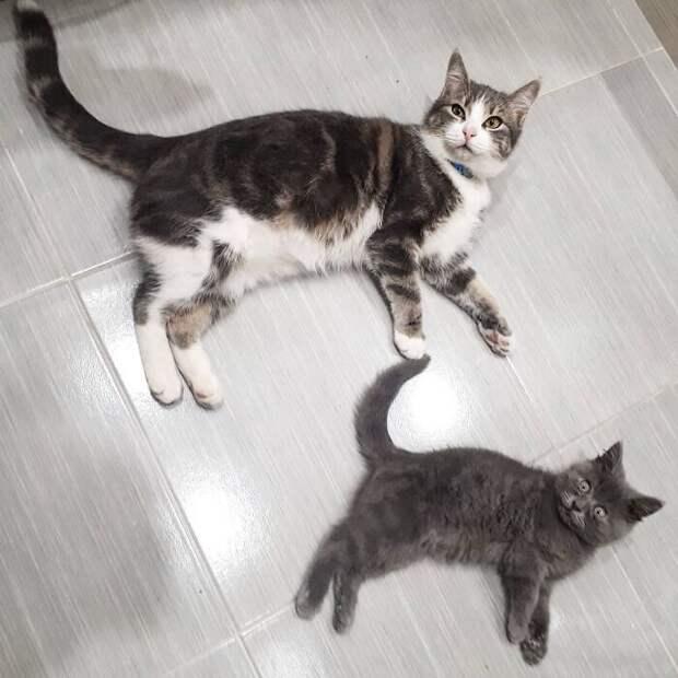 История лупоглазого кота Феди растрогала соцсети