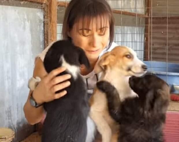 Женщина и щенки