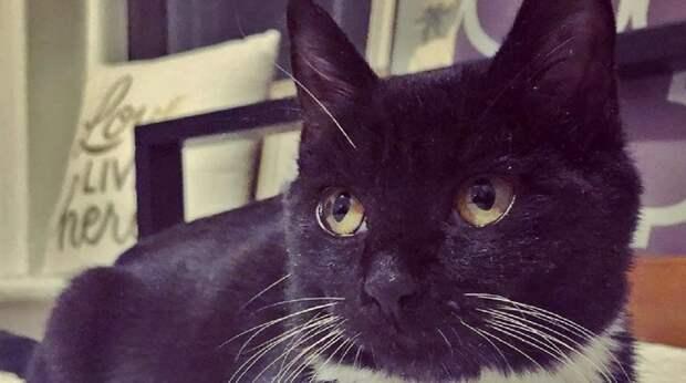 Услышав жалобное мяуканье, девушка выглянула в окно и увидела на крыше кошку