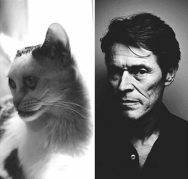 Женщина взяла из приюта кошку и поняла, что теперь у нее дома есть свой Стив Бушеми Стив Бушеми, забавно, забавное сходство, кошка, напоминает, необычная внешность, необычная морда, сходство