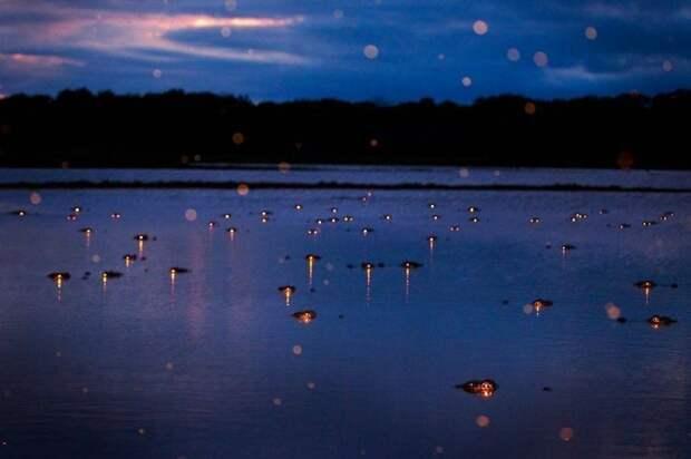 Парень сделал снимок ночного болота, а когда проявил его, увидел, что был там не один