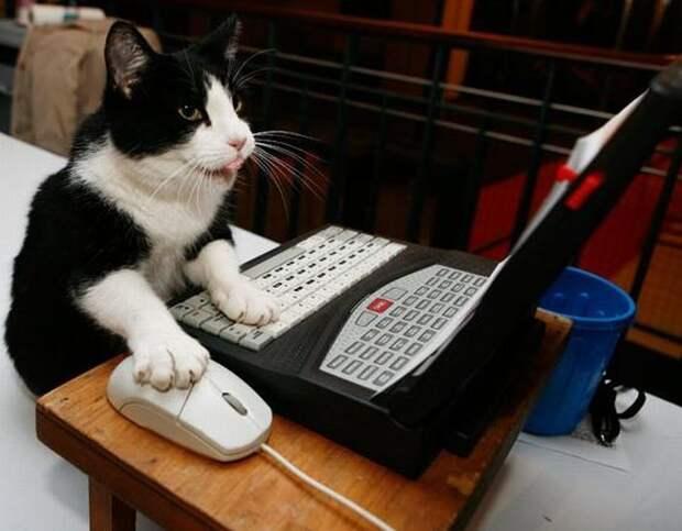 Животные за компьютером (15 фото)