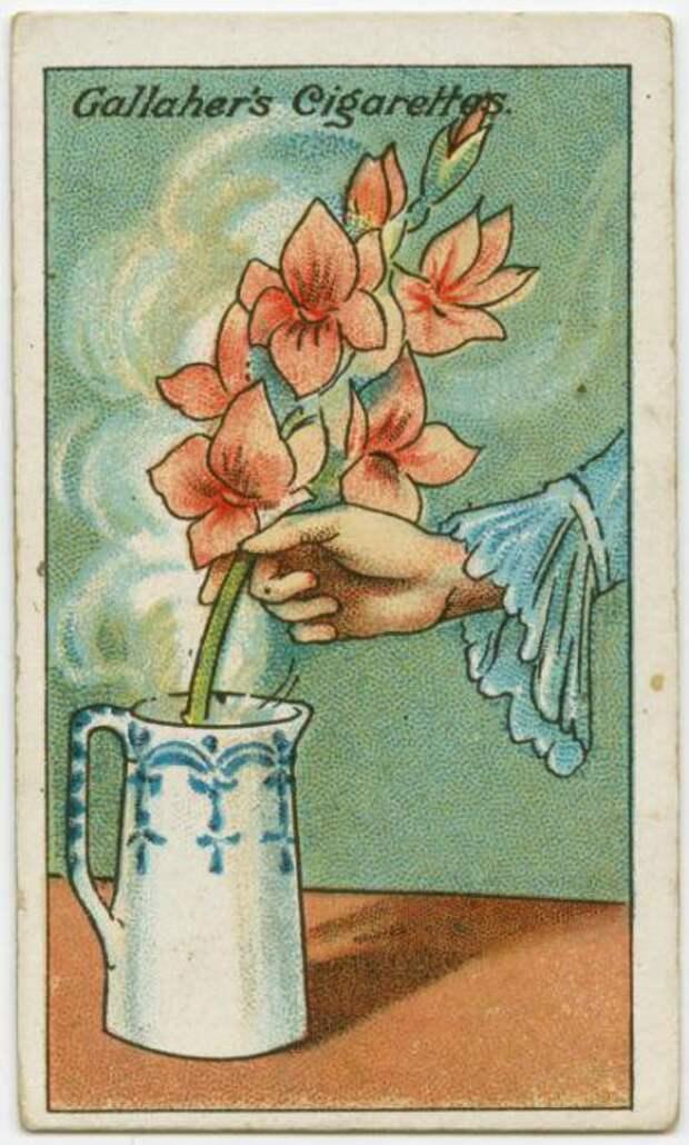 8. Как оживить увядшие цветы Полезные, советы