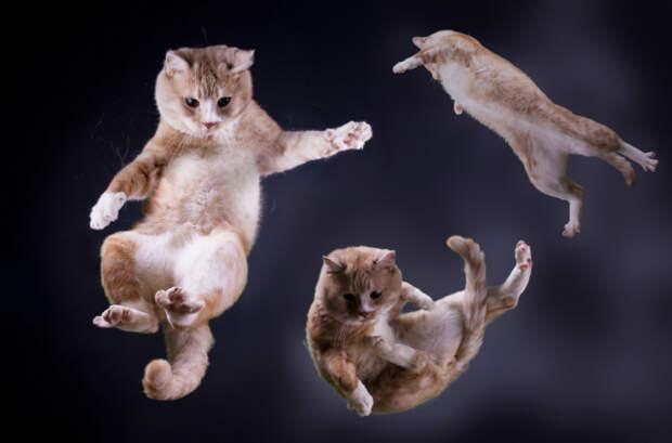 Почему кошки всегда приземляются на четыре лапы?
