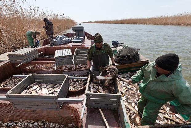 Как ловят рыбу профессионалы
