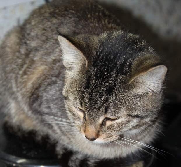 """""""Слышу я во сне, как кошка меня зовёт, так и говорит человеческим голосом: """"Вставай, пора просыпаться..."""""""