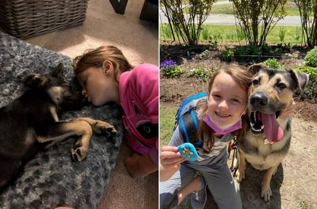До и после: 17 трогательных фото усыновленных животных, которые обрели дом