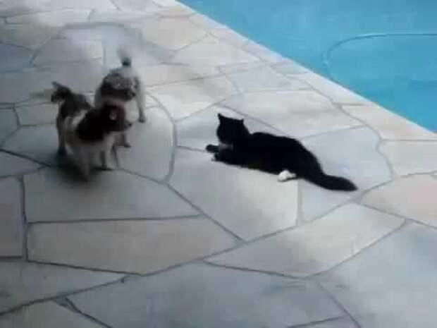 Собака напугала кота и тут же получила по заслугам