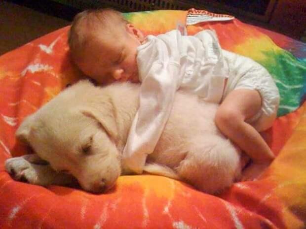 ребенок спит рядом со щенком