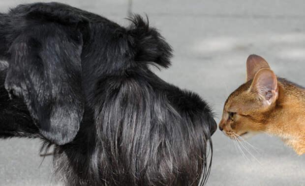 Кто умнее — кошки или собаки?