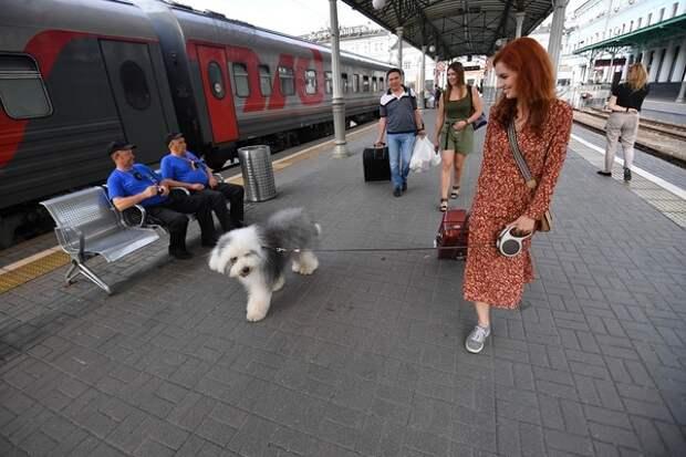 В Подмосковье появились зеленые собаки, и ветеринар нашел этому разумное объяснение