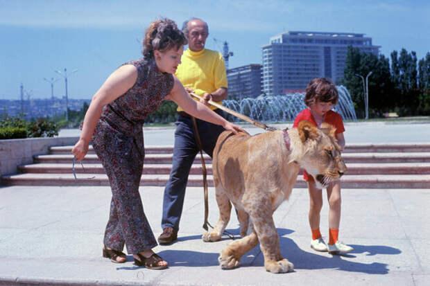 Львы в советской квартире: как любовь к кино и животным превратилась в трагедию