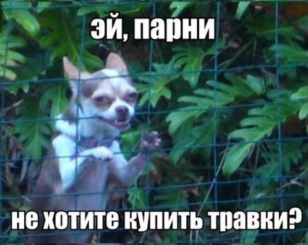 ФОТОПРИКОЛ