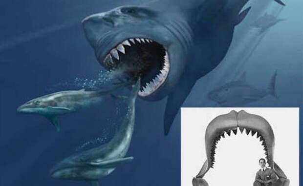 10 самых редких акул найденные в морских глубинах