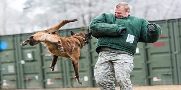 4. Если собака сбила вас с ног: закрывайте шею бродячие собаки, животные, нападение, напала собака, опасно, самооборона, собаки, советы