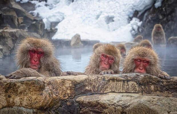 Впечатляющие снимки дикой природы победителей фотоконкурса # Wild2020