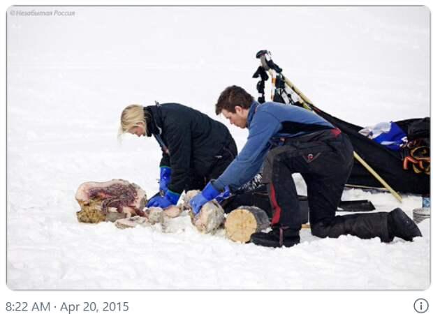 Неизвестная экспедиция Кусто в Антарктиду: жуткая одиссея