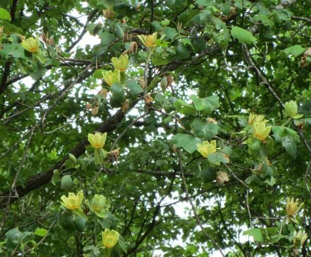 Тенистый сад: быстроразвивающиеся растения
