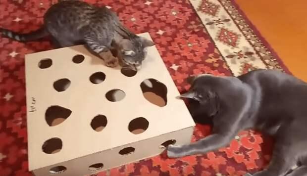 Хотите порадовать своего кота? Сделайте ему приятный сюрприз