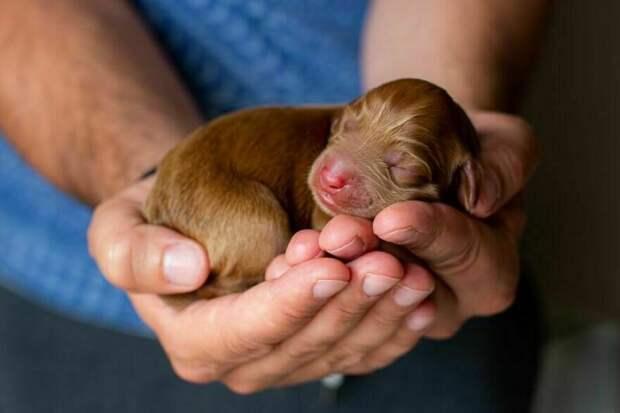 25 трогательных фото животных, вызывающих умиление и улыбку