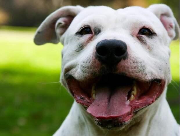 Сударь - случай из жизни собаки