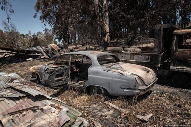 Огненный ад в Австралии: выжженная земля и трупы животных