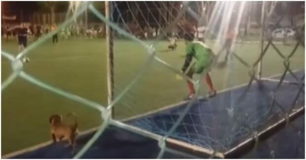 Пробравшийся на стадион пёс отбил пенальти в решающий момент футбольного матча бразилия, видео, животные, прикол, собака, спорт, футбол, юмор