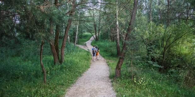 Серебряный бор вошел в ТОП-7 лучших мест для осенних прогулок