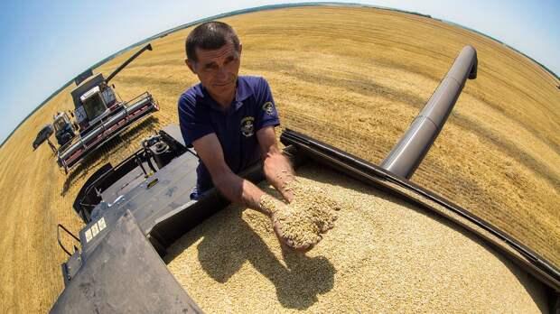 Как Россия стала мировым лидером по экспорту пшеницы