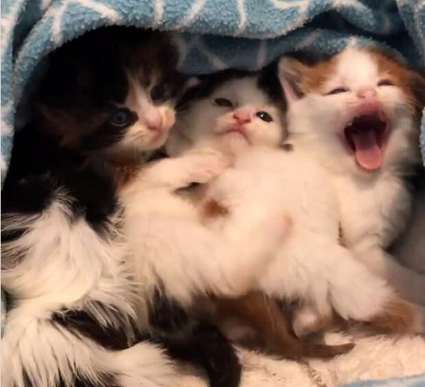 Меньше всего ожидаешь увидеть маленьких котят в мусорнике. Мужчина услышал плач и заглянул внутрь