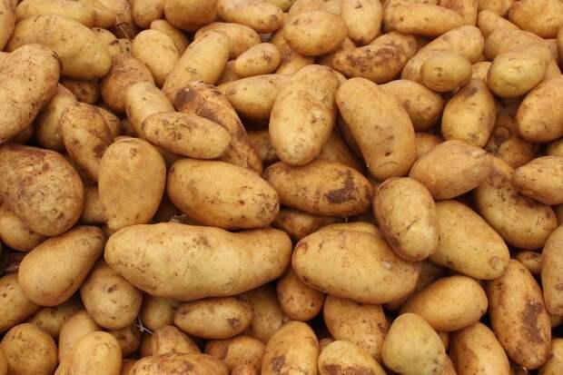 В Омске залатали дорогу картошкой