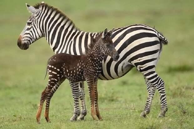 Дизайнер - матушка природа. Животные с необычным окрасом (20 фото)