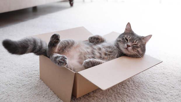 Кошек предложено сделать подопытными животными