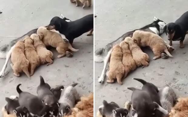 Махнемся не глядя: собаки поменялись щенками и сделали вид, что не заметили