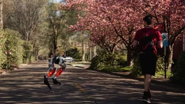 Двуногий робот Кэсси завершил пробег на 5 км за 53 минуты и дважды самостоятельно восстановился после сбоев (Видео)