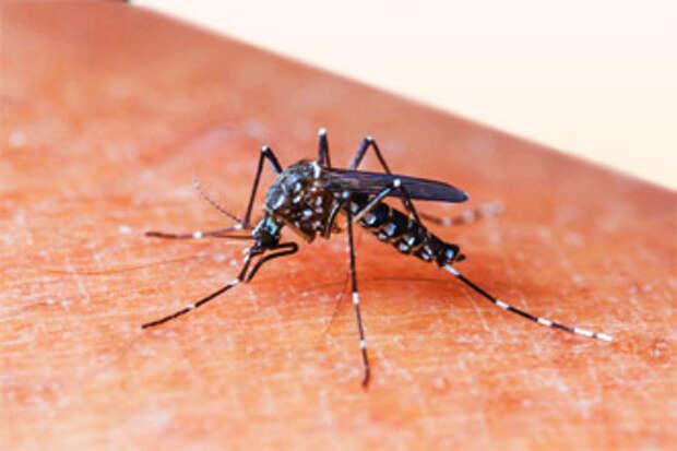комариный укус, последствия