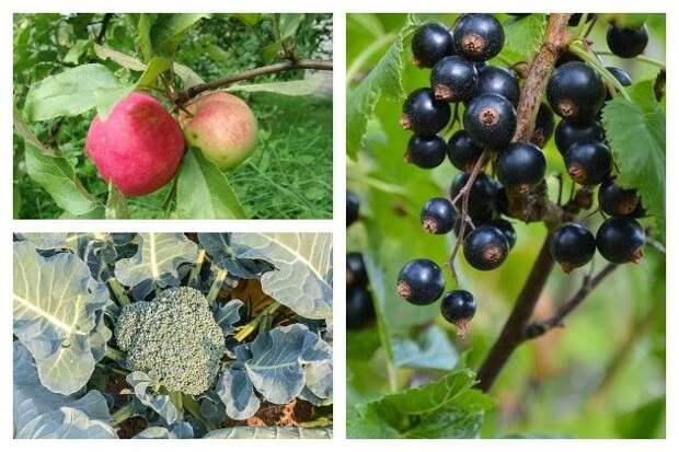 10 растительных продуктов для здоровья суставов