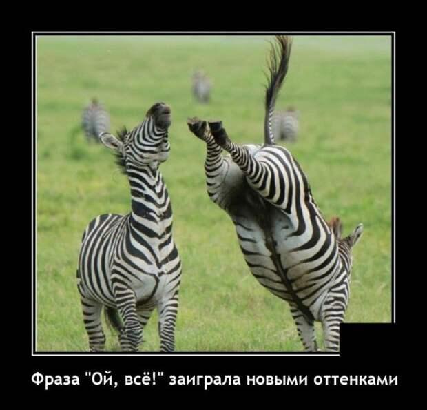 Демотиватор про зебру