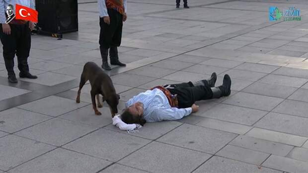 Бездомная собака помогла актеру, притворившемуся раненым