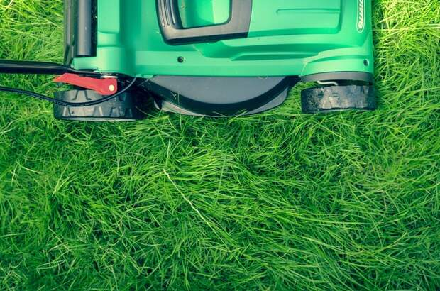 Как вы оцениваете состояние газона в вашем дворе? — новый опрос жителей Ростокина