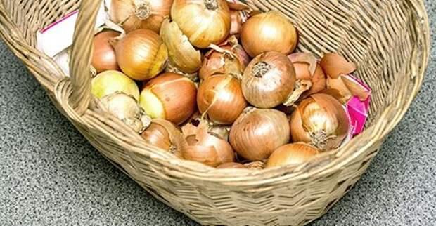 Как сохранить севок и лук-репку?