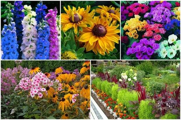 Май: безрассадные цветы